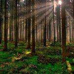 Acciones para cuidar nuestros bosques