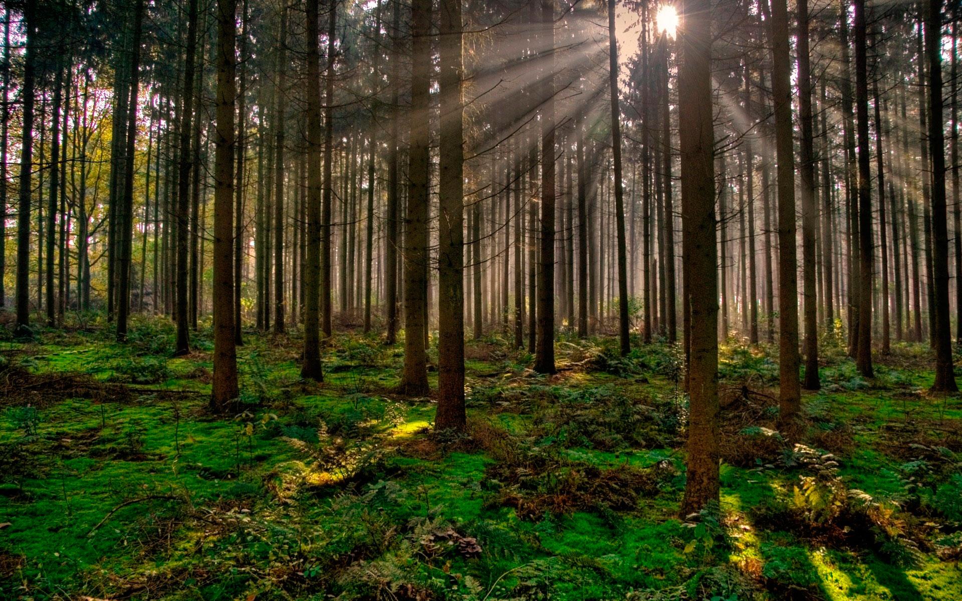 Acciones para cuidar nuestros bosques • Teorema Ambiental