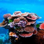 La importancia de los océanos