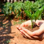 9 de cada 10 mexicanos preocupados por el medio ambiente: estudio
