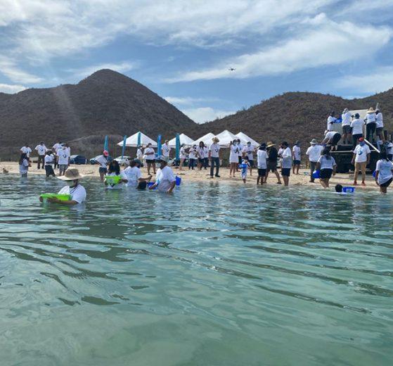 Liberan 20 mil crías de totoaba en Baja California Sur