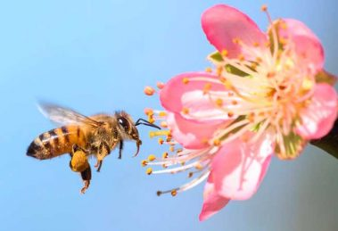 abeja-fuente