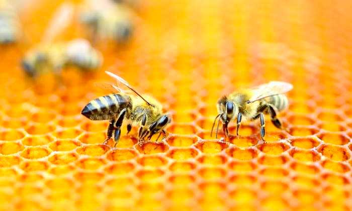 abejas-matematicas