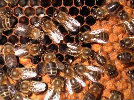 abejas-matematicas01