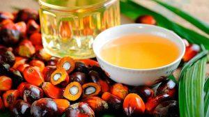 aceite-palma01