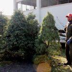 Acude a los centros de acopio y recicla tu árbol de Navidad