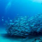 Sinaloa alista acuario para investigación científica
