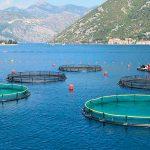 Agricultura inteligente ayudaría a ecosistemas marinos