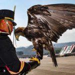 Águila real, símbolo nacional y de preservación