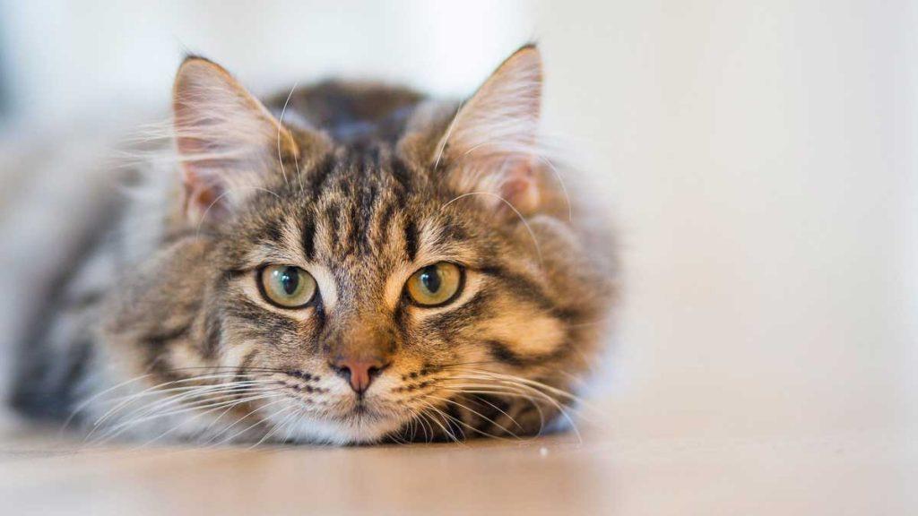 alimento-gatos01