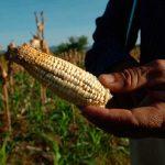Alimentos viven seria amenaza por cambio climático