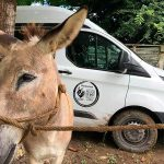 Animales que participaron en brigadas reciben tratamiento