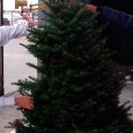 Impide Profepa cargamento de árboles de Navidad con plaga