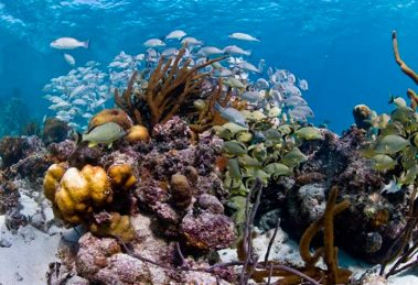 arrecife-deja