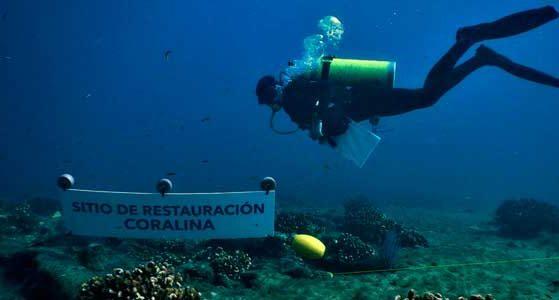 arrecifes-bc01