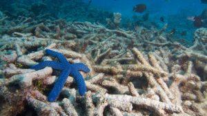 arrecifes01