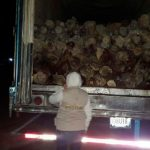 Decomisan 26.7 toneladas de tallos de palmilla del desierto