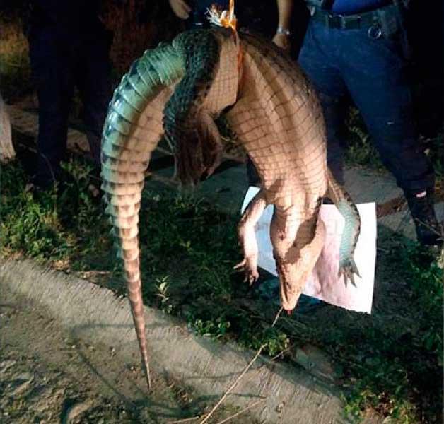 asesinos-cocodrilos
