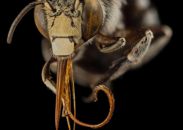 asi-abejas
