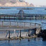Desarrollan plan nutricional para atún en cautiverio