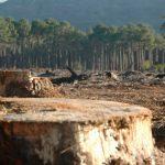 Aumenta casi 15 % la extensión de terrenos invadidos en el Ajusco