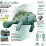 Actividades para proteger manatí