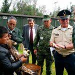 Avanza santuario del águila real en México