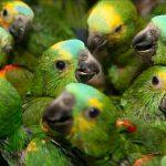 Aves amenazadas en México