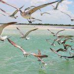 Generan conciencia para el cuidado de aves en Holbox
