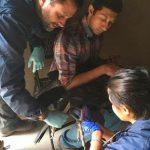Crías de cóndor se adaptan a su nuevo hogar en Baja California
