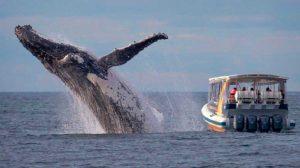ballena-marinos