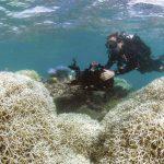 Irrecuperable parte de la Gran Barrera de Coral