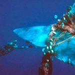 Basura en el mar mata a millones de animales