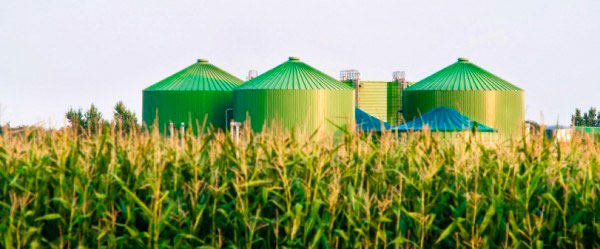 biomasa-al