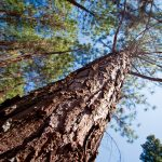 Bosque sustentable en Brasil