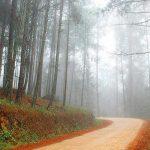 Bosque en Oaxaca tomará segundo aire