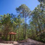El bosque relicto