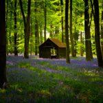 ¿Cuánto pueden los bosques contribuir a la mitigación del cambio climático?