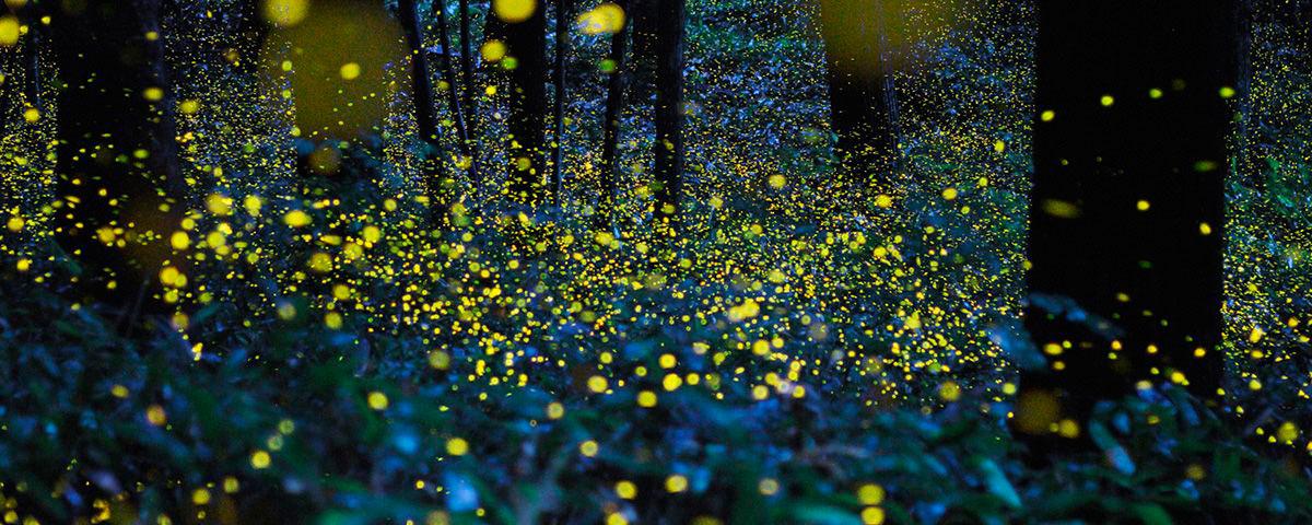 Bosques de luz en tlaxcala Espectaculo de luciernagas en tlaxcala