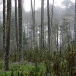 ¿Quién detiene la destrucción de los bosques templados?