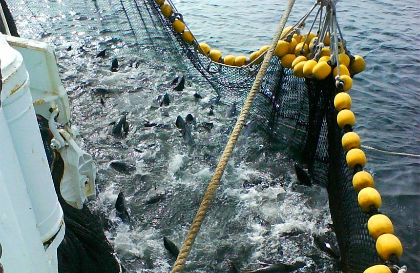 buques-pesqueros