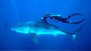 buzo-tiburon01