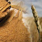Clima amenaza producción mundial de cereales