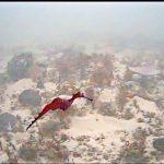 Captan por primera vez a dragón de mar rubí