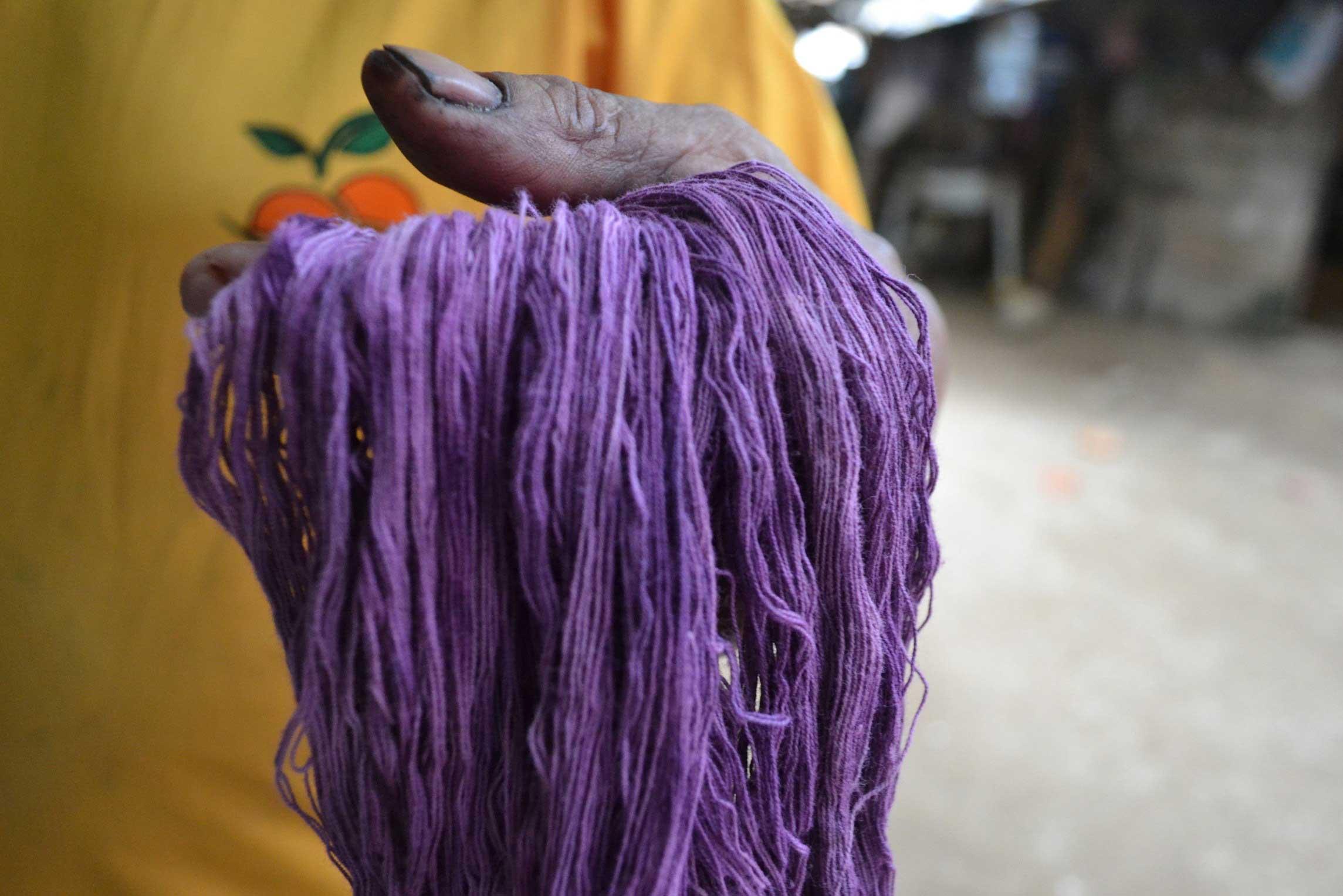 caracol-purpura01