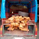 Asegura Profepa 64 tablones de cedro rojo en Hidalgo