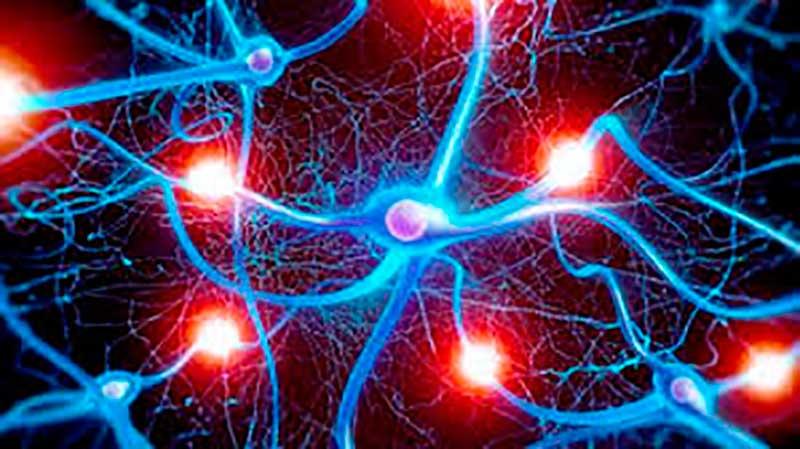 cerebro-impulsos