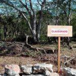 Clausuran predio por afectaciones a terrenos forestales en Yucatán
