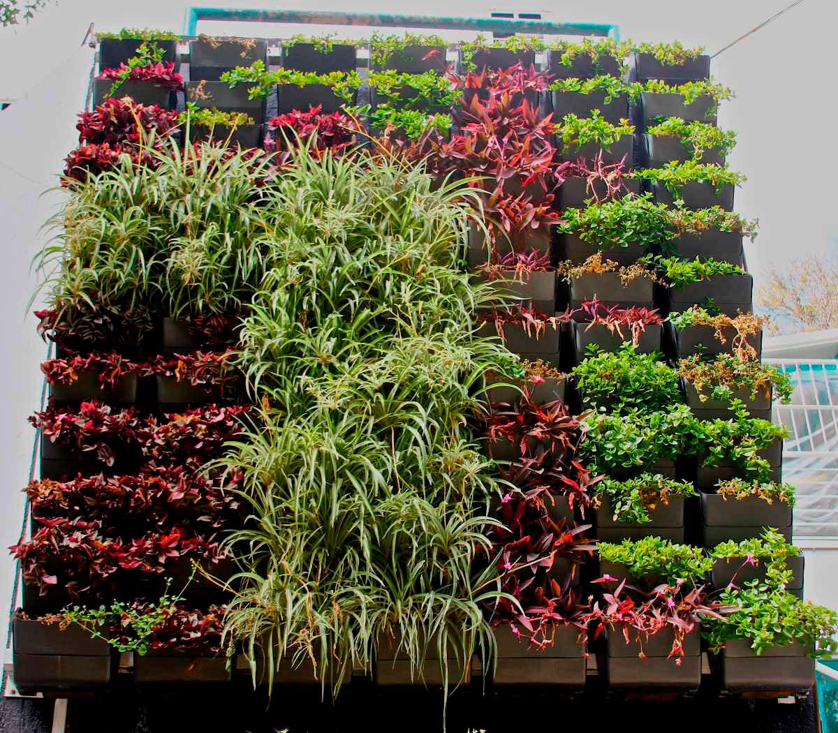 Muros verdes teorema ambiental - Como hacer un muro verde ...