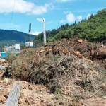 Conafor informará sobre tala de árboles en construcción de tren